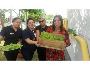 Encontros saudáveis. Colaboradores da Viper participam de horta 100% orgânica